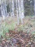 белое болото